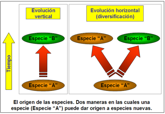 Blog 150228 - Horizontal & vertical evolution - 2