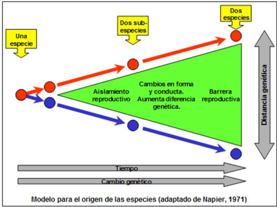 Blog 150228 - Origen de especies - 2