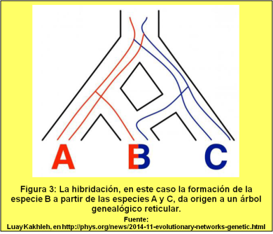 Blog 150330 - Árbol genealógico - Fig. 3