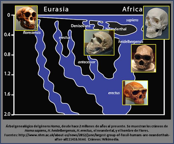 Blog 1505XX - Homo family tree