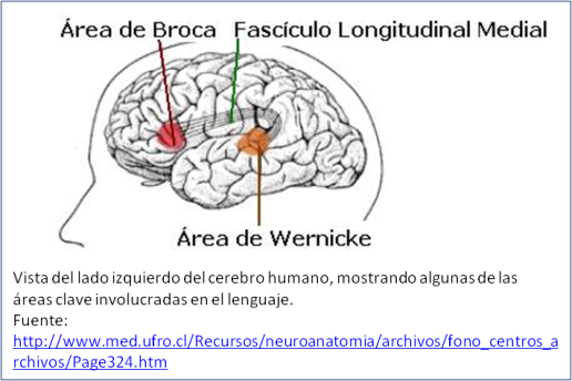 Blog 1505XX - Broca & Wernicke areas