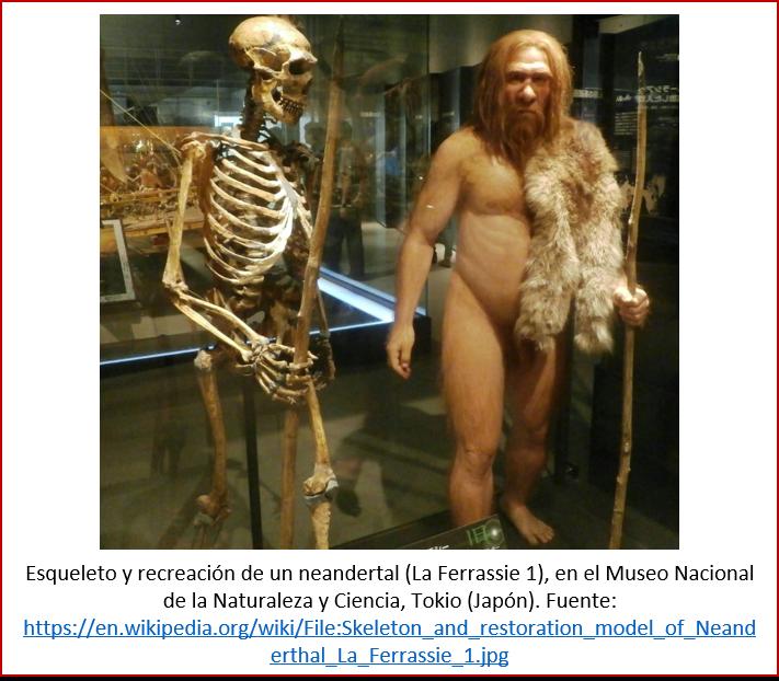 Blog 1603XX - Esqueleto y recreación de neandertal