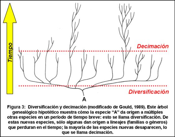 Blog 1706XX - Ritmo de la evolución - Figura 3