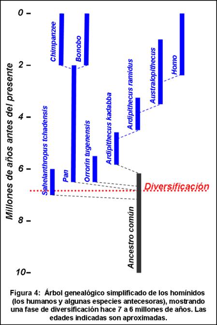 Blog 1706XX - Ritmo de la evolución - Figura 4