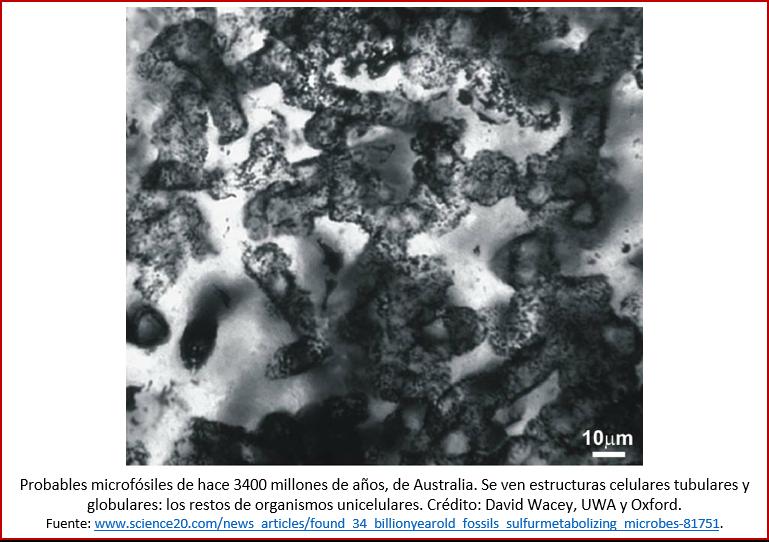Blog 180811 - Microfósiles