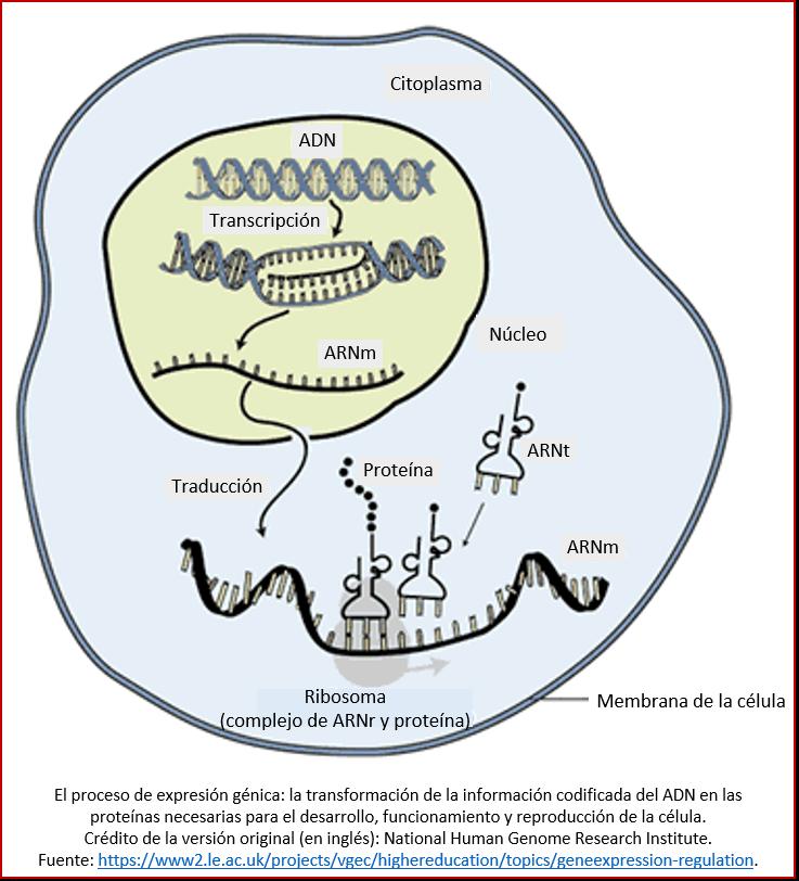 Blog 1811XX - Expresión génica