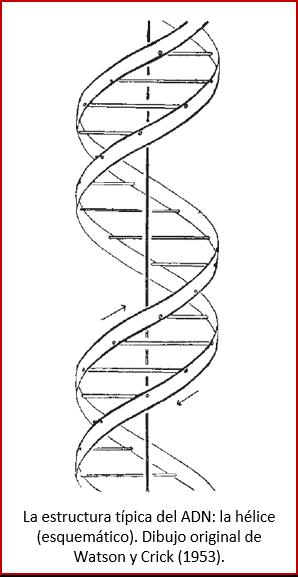 Blog 1811XX - Hélice del ADN