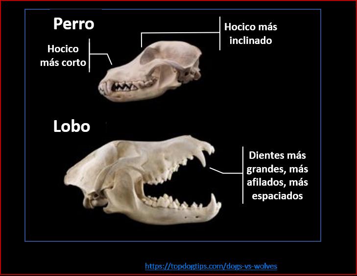 Blog 200201 - Revolución neolítica 4 - cráneos
