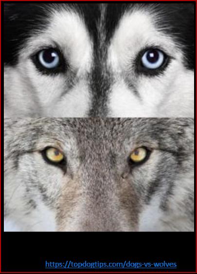 Blog 200201 - Revolución neolítica 4 - ojos de cachorro