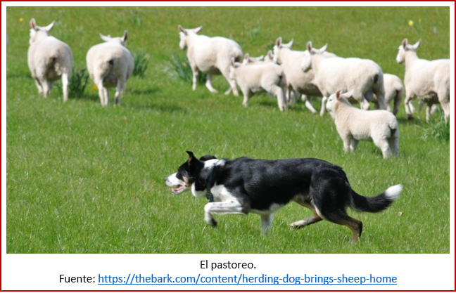 Blog 200201 - Revolución neolítica 4 - pastoreo