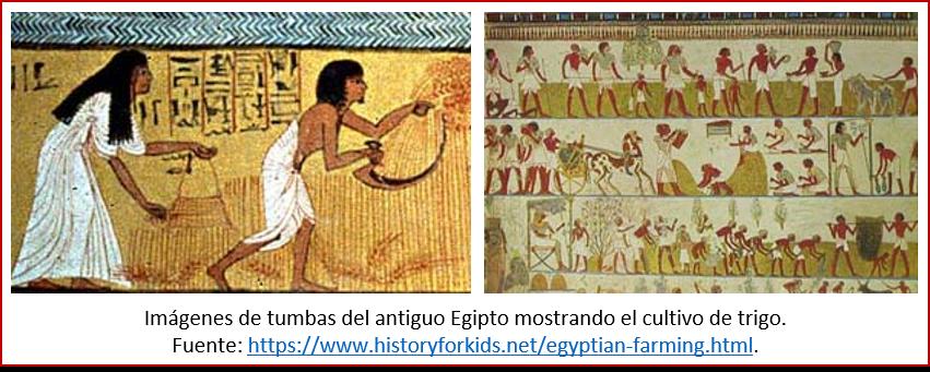 Blog 2006xx - Revolución neolítica 8 - Egipto