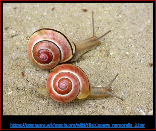 Blog 2007xx - Evolución contemporánea - caracol