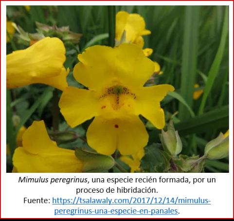 Blog 2007xx - Evolución contemporánea - Mimulus
