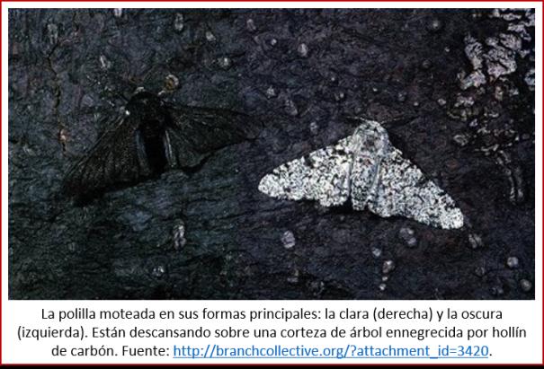 Blog 2007xx - Evolución contemporánea - polilla